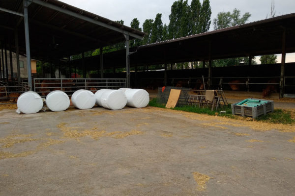 azienda-agricola-faggion-badia-polesine-rovigo37