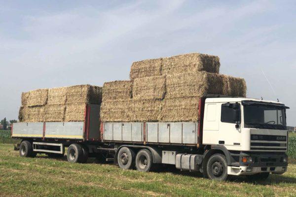 foraggi commercio e trasporto faggion veneto italia (10)