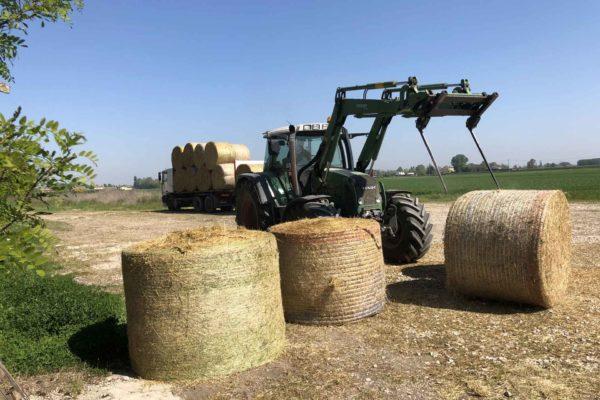 foraggi commercio e trasporto faggion veneto italia (5)